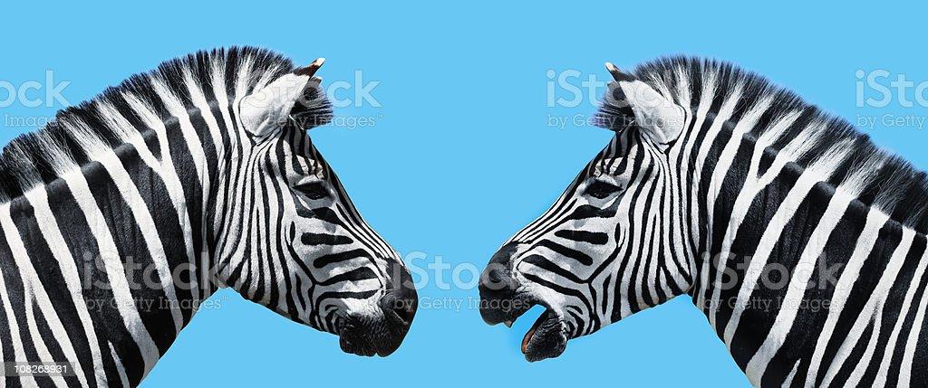 Zebras in conversation royalty-free stock photo