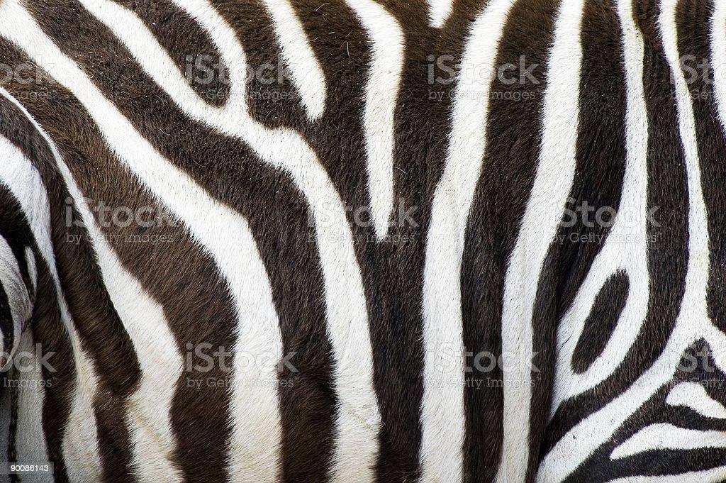 zebras skin stock photo