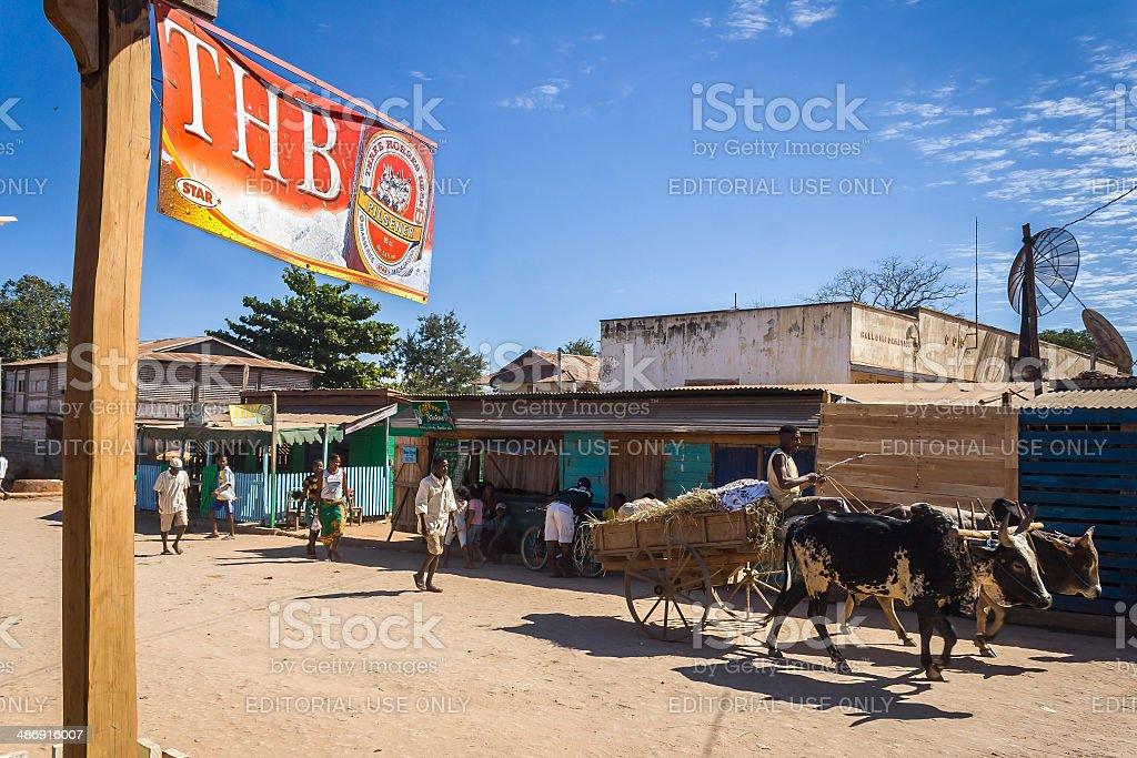 Zebu cart stock photo