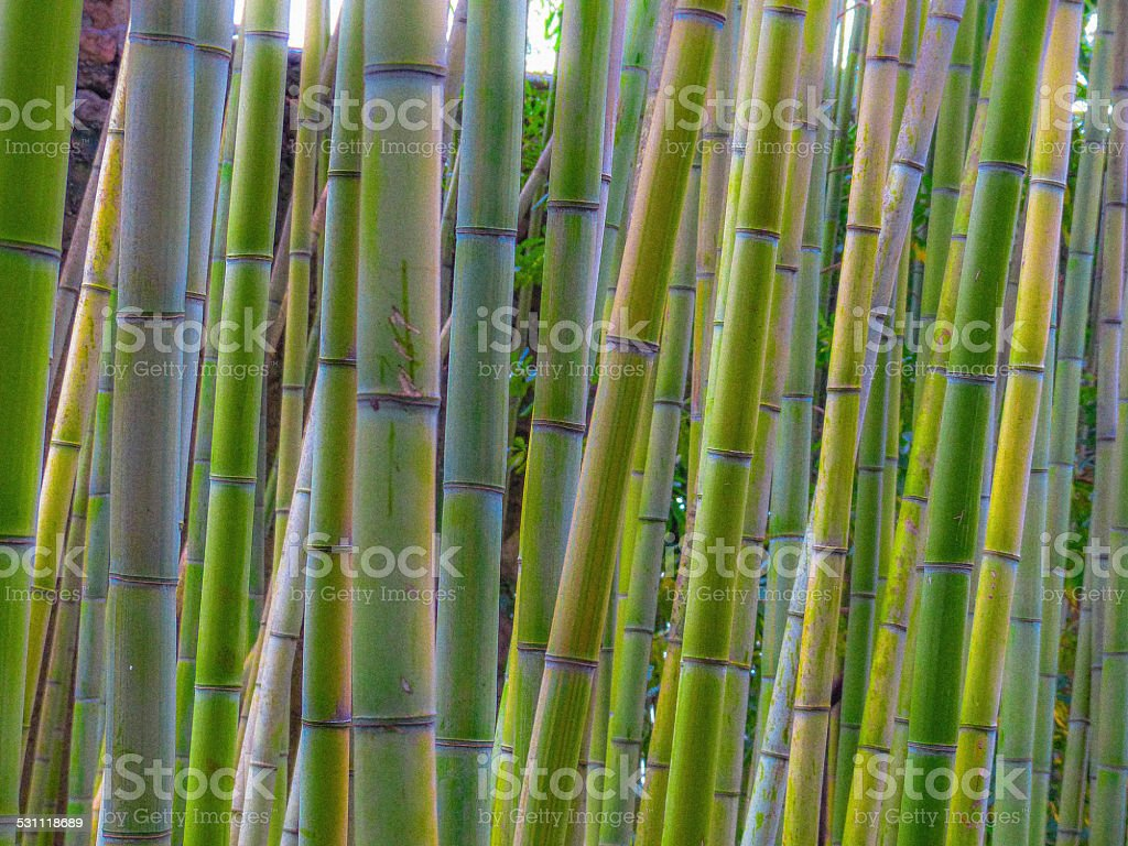 Zen bamboo forest stock photo