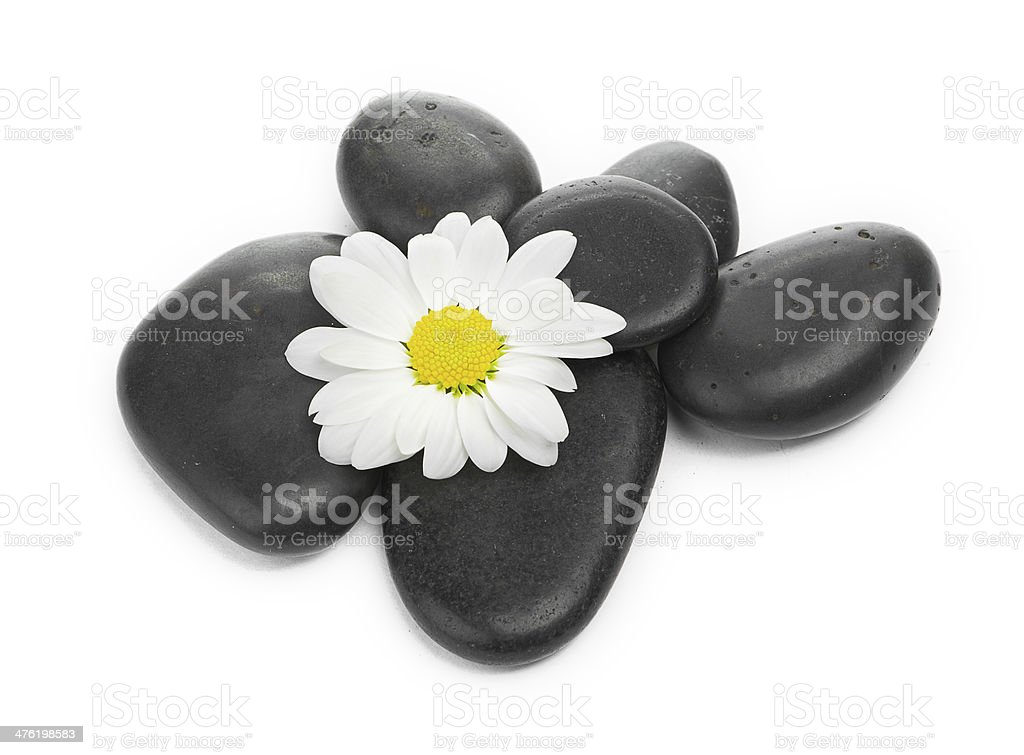zen basalt stones and daisy isolated on white stock photo
