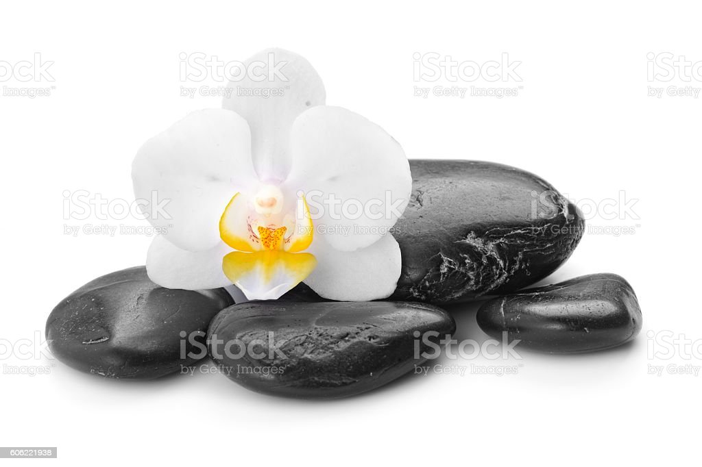 zen basalt stones and orchid stock photo