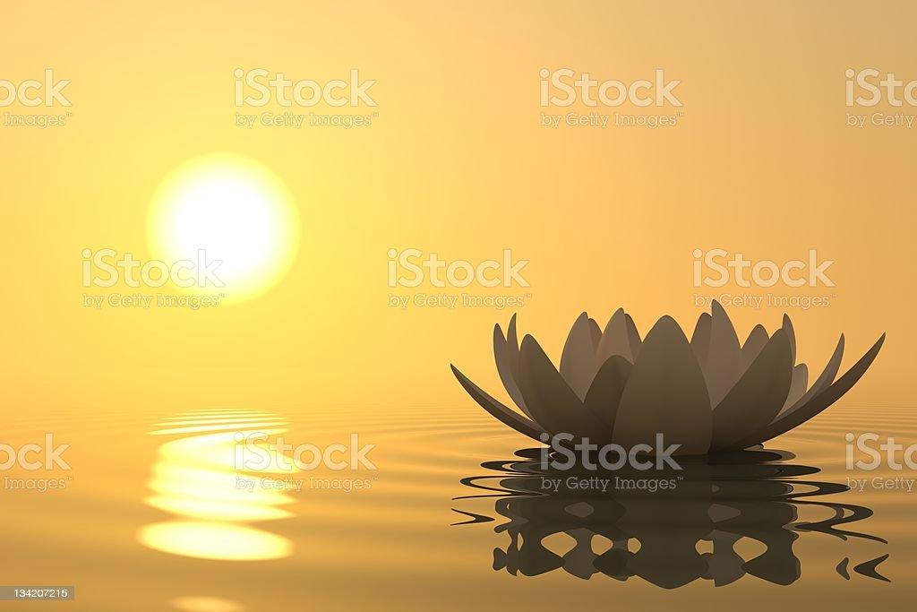 Zen flower lotus on sunset stock photo