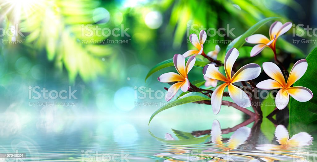 zen garden - plumeria - beauty in nature background stock photo