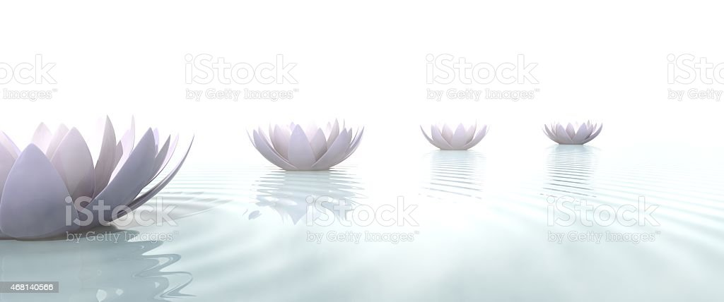 Zen lotus flowers draw a path on the water stock photo