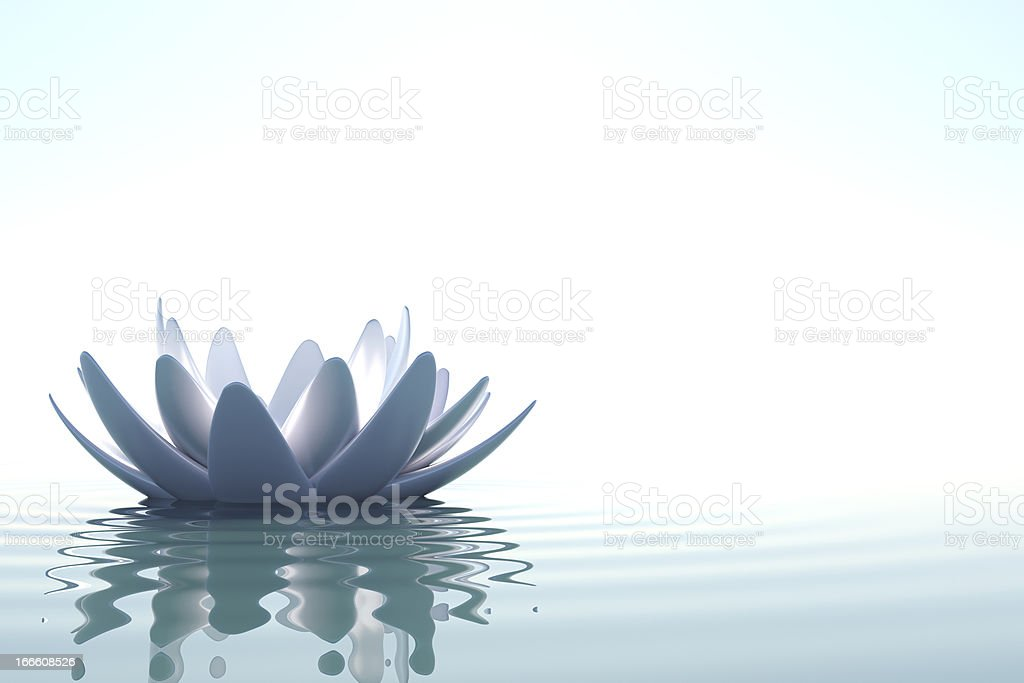 Zen lotus flowers in water on white background stock photo