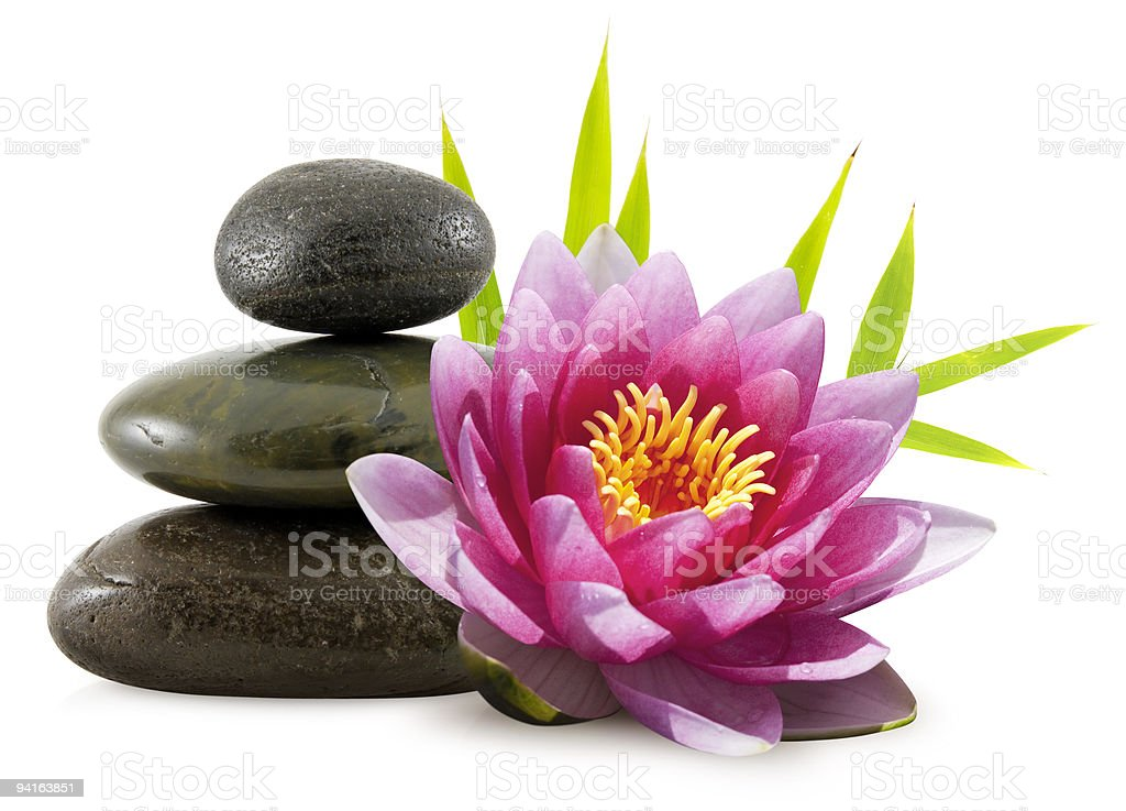 Zen pebbles and water lily royalty-free stock photo