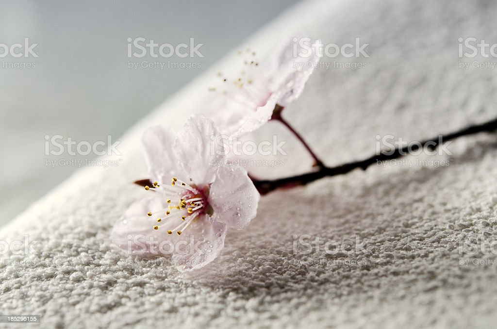 Zen Spa Concept with Towel and Flower stock photo