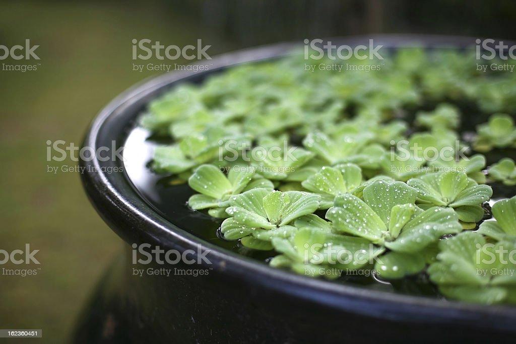 Zen water garden stock photo