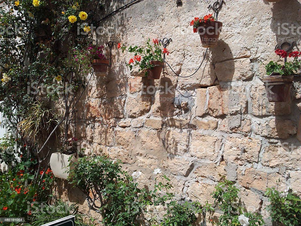 zichron yaakov plants wall stock photo