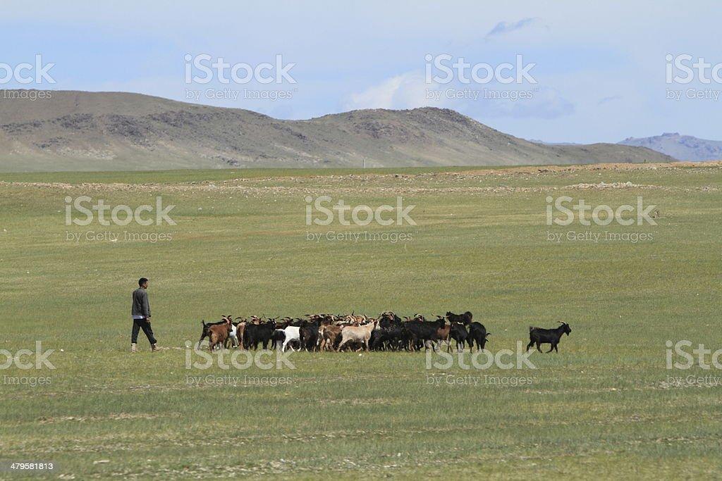 Ziegenhirte in der Mongolei stock photo