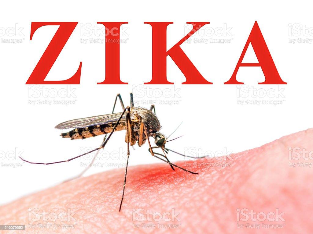 Zika Virus Mosquito stock photo