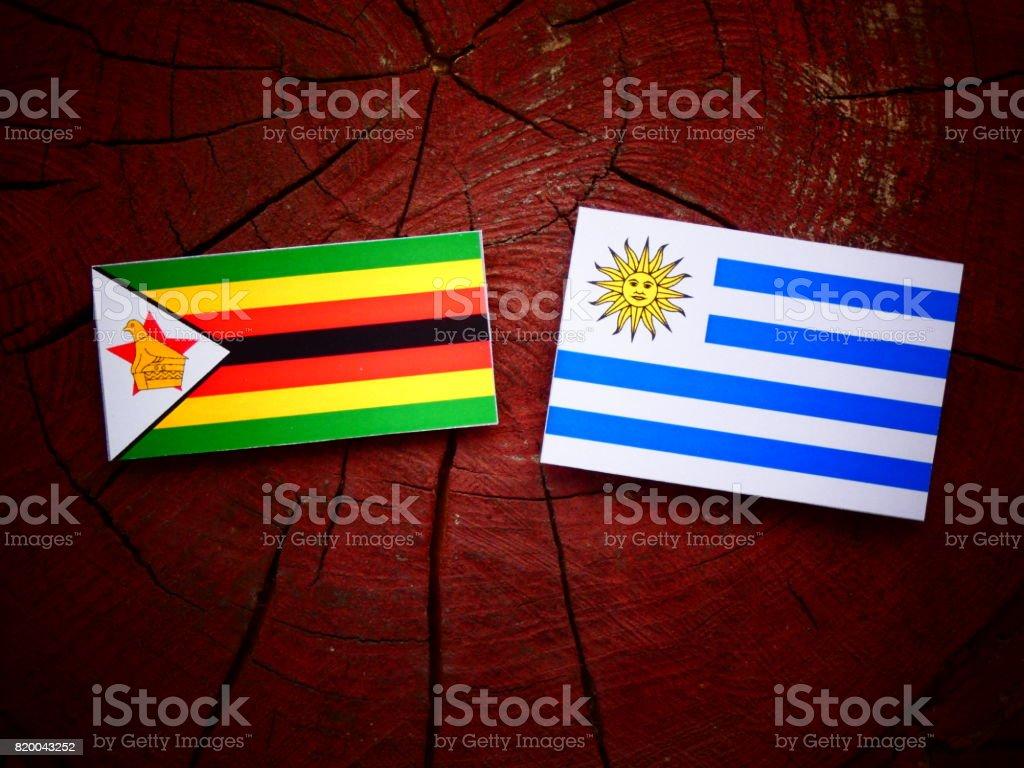 Zimbabwe flag with Uruguaian flag on a tree stump isolated stock photo