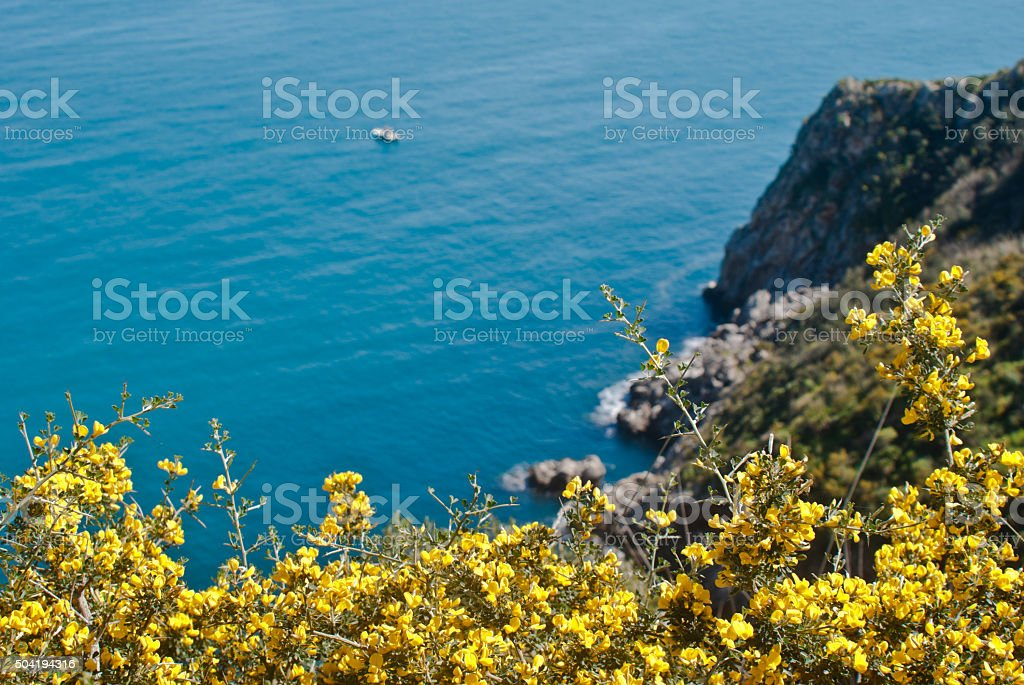 Zingaro Natural Reserve with mimosas stock photo