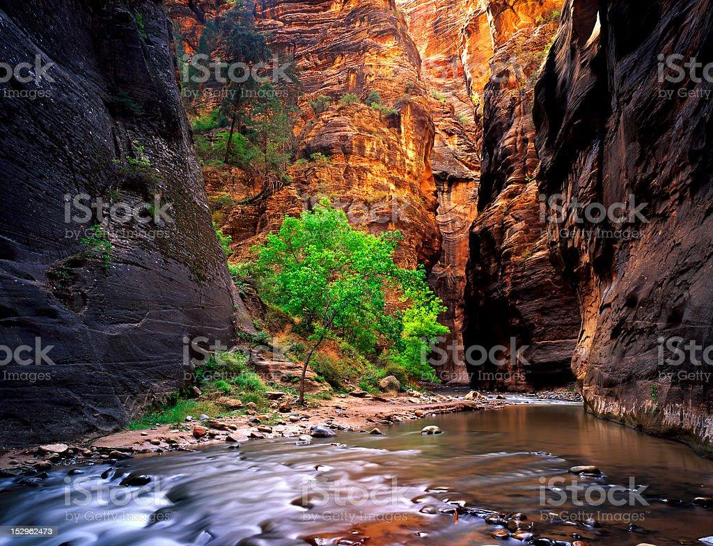 Zion Canyon stock photo