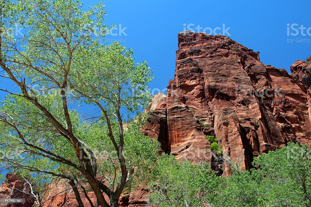 Zion National Park, USA royalty-free stock photo