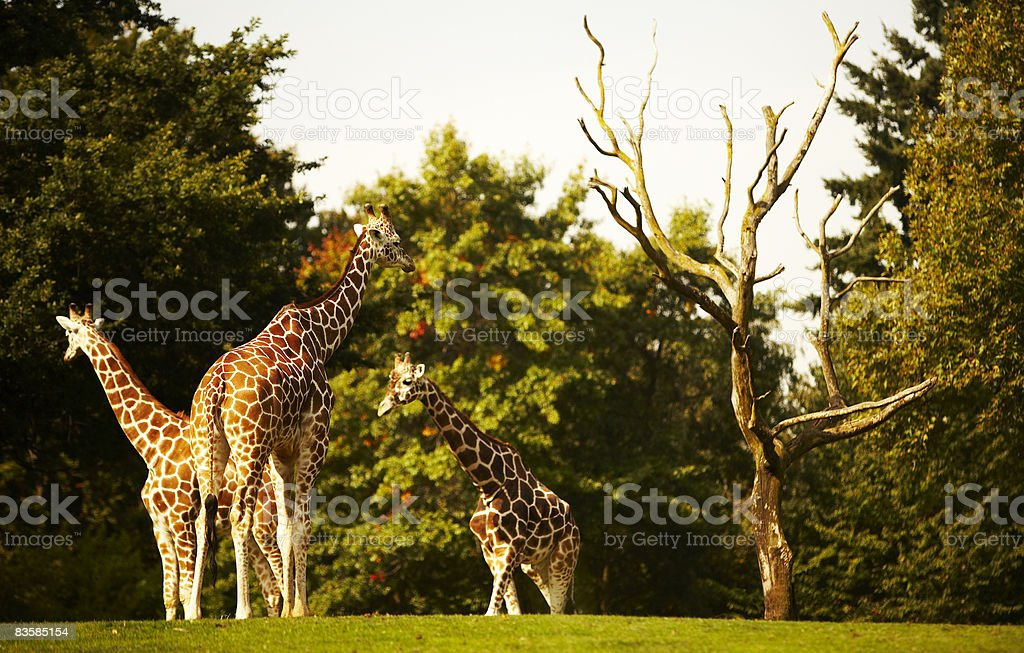 zoo animals stock photo