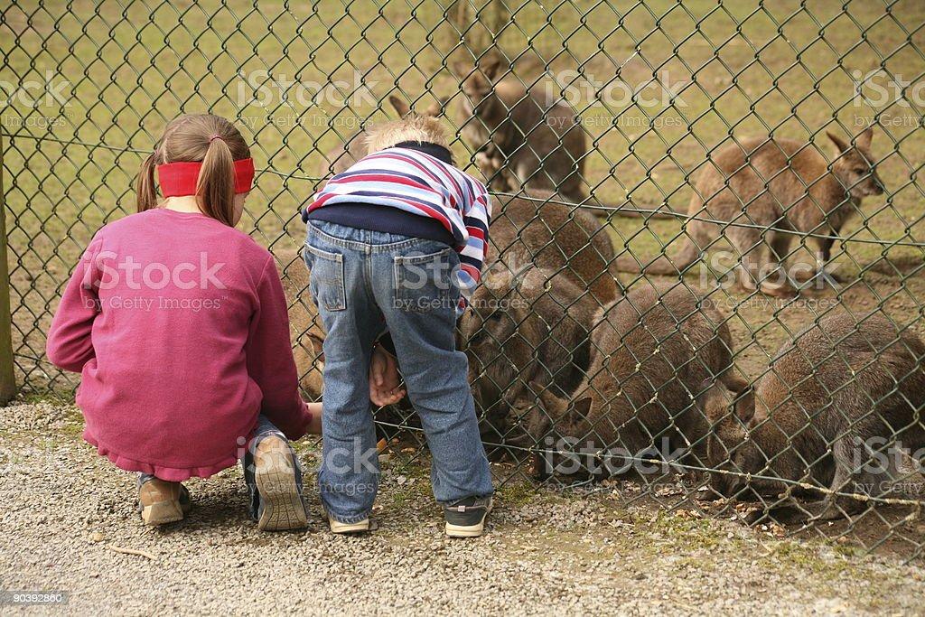 Zoo attendance royalty-free stock photo