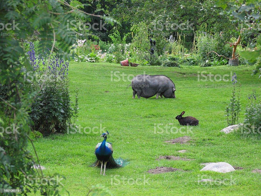 Zoo royalty-free stock photo