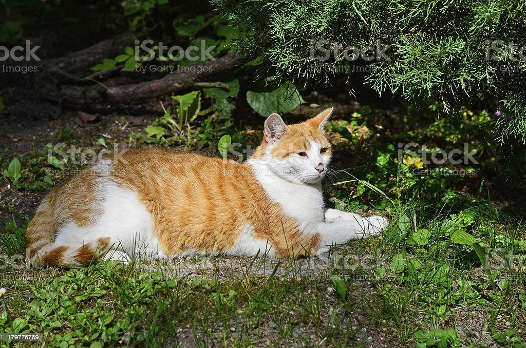 Zoology, pet royalty-free stock photo