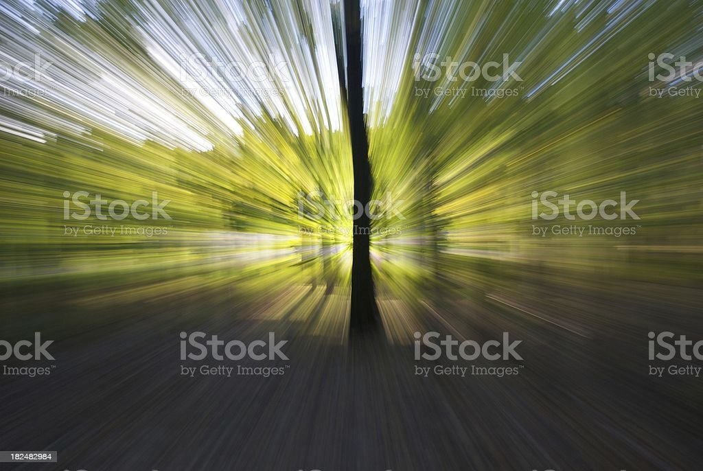 Zoom Forest royalty-free stock photo