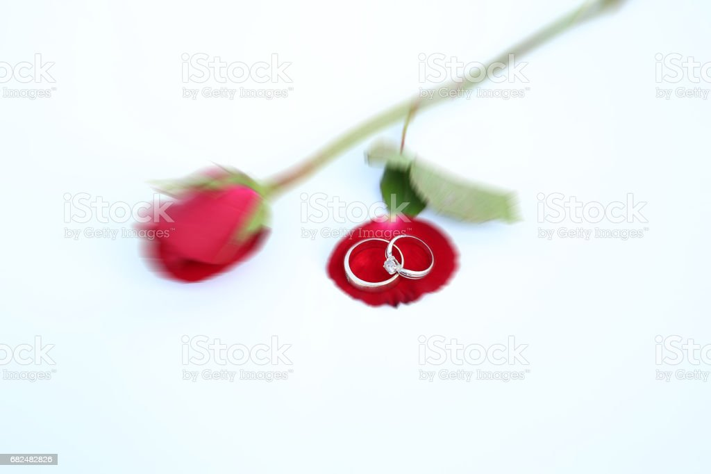 Zoom image of Red roses flower focus at wedding ring on white background. stock photo