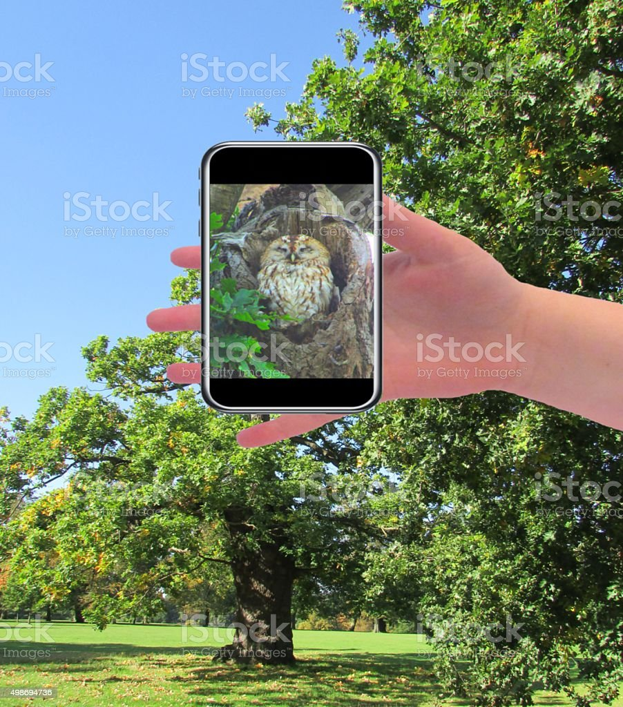 zooming into a tree to see a tawny owls nest stock photo