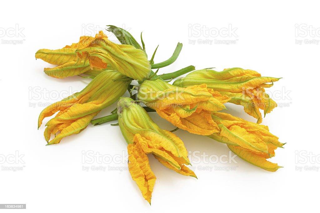 Zucchini flowers. stock photo