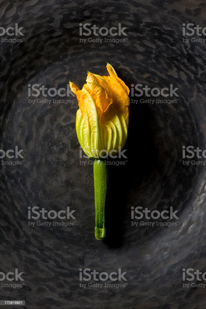 Zuccini Blossom royalty-free stock photo