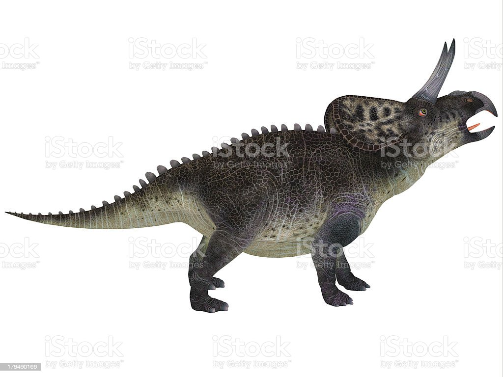 Zuniceratops on White royalty-free stock photo