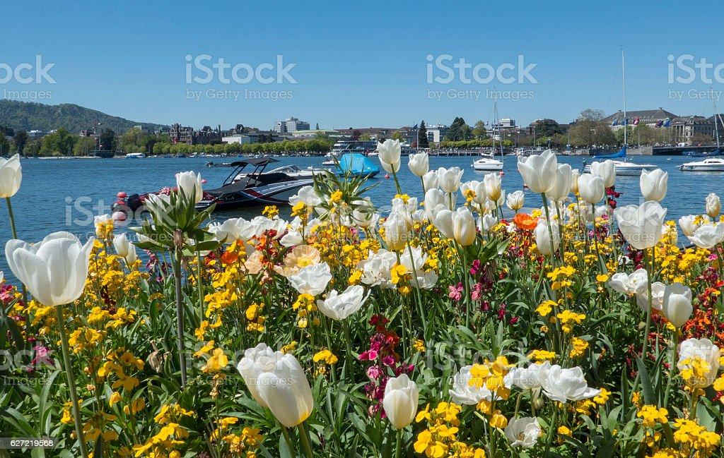 zurichsee and tulips, Zurich, switzerland stock photo