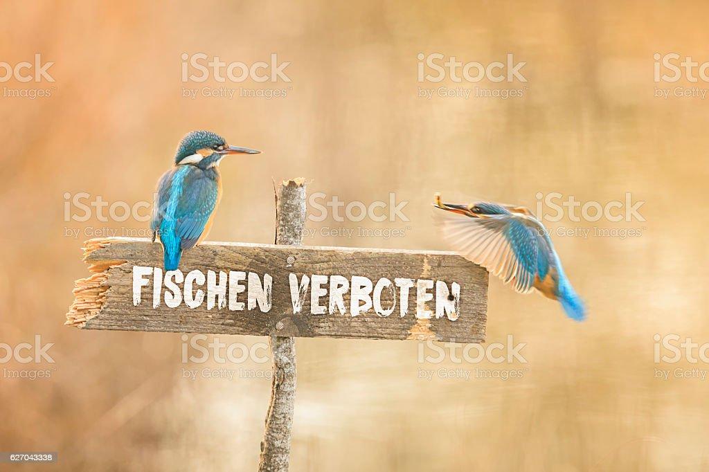Zwei Eisvögel auf Fischen verboten Schild stock photo