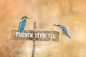 Zwei Eisvögel auf Fischen verboten Schild