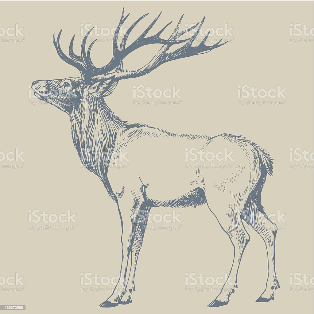 DEER stock photo
