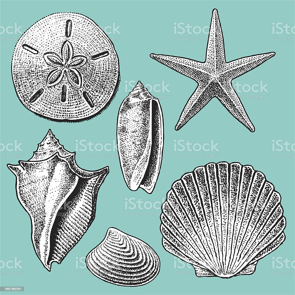 SEA SHELL COLLECTION vector art illustration