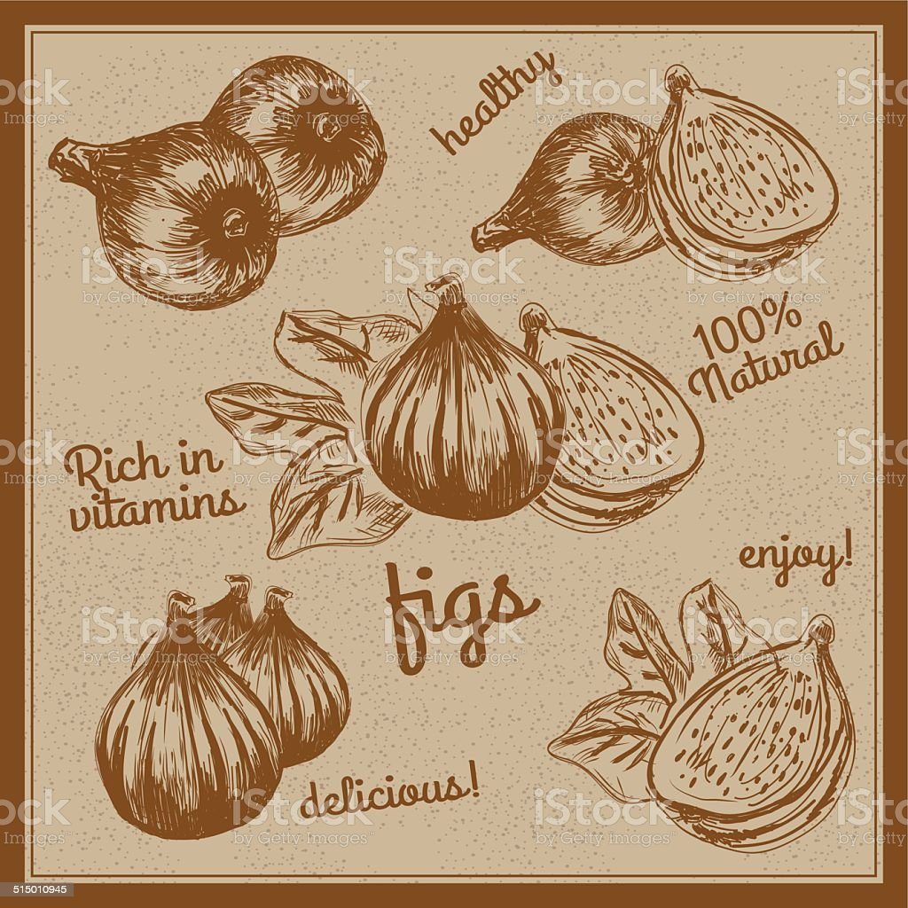 COMPOSITION OF HAND DRAWN FIGS vector art illustration