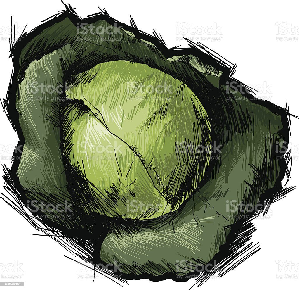 ?abbage royalty-free stock vector art