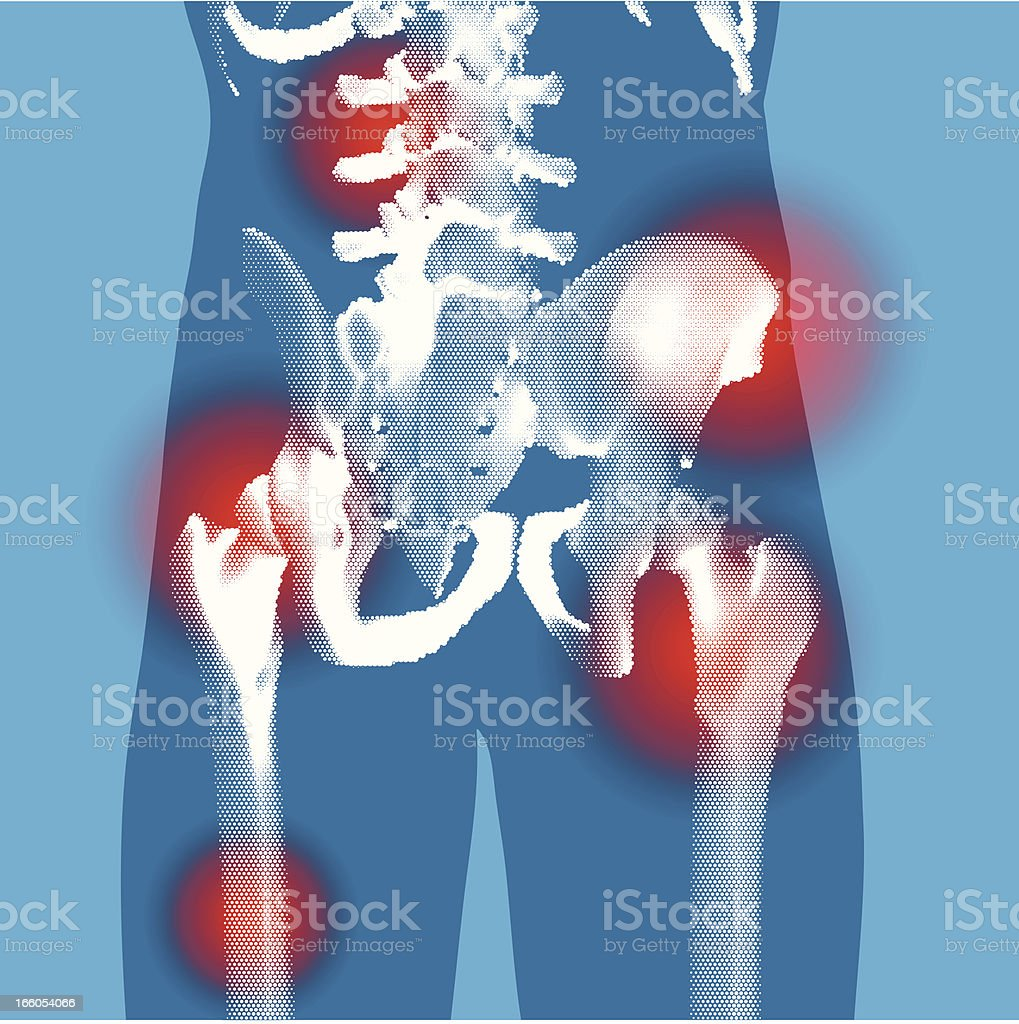 Abdomen - Stylized Rear 3 quarter X-ray view royalty-free stock vector art