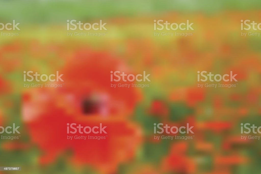 abstract blurry background - meadow with poppy vector art illustration