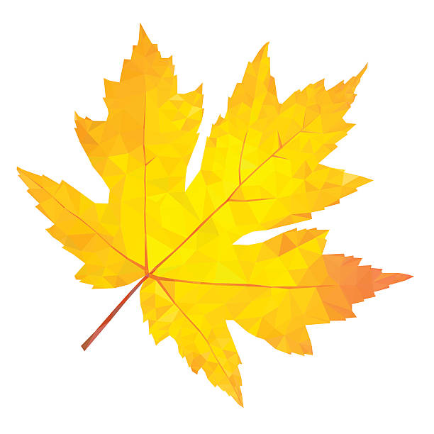 Maple Tree Clip Art, Vector Images & Illustrations - iStock
