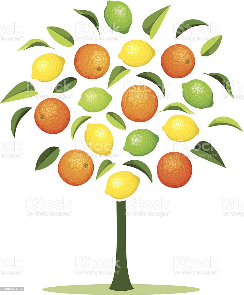 Abstract tree with various citrus fruits. Vector illustration. royalty-free stock vector art