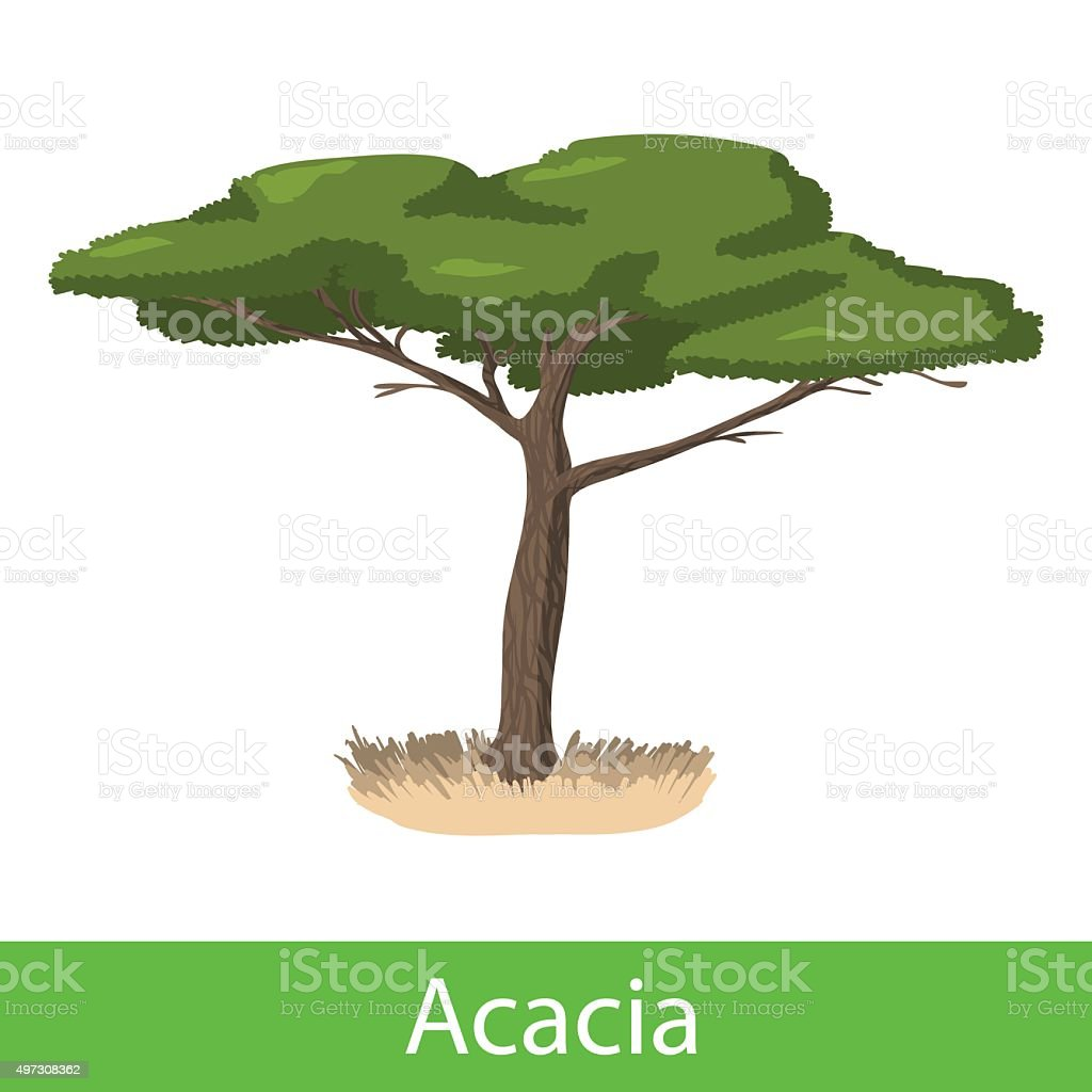 Acacia cartoon tree vector art illustration