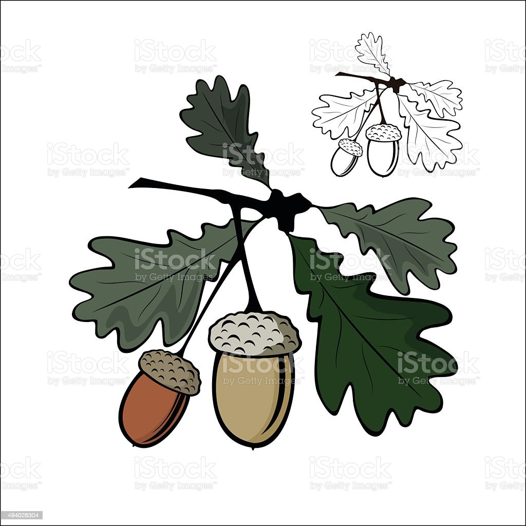 Acorn and leaf royalty-free stock vector art