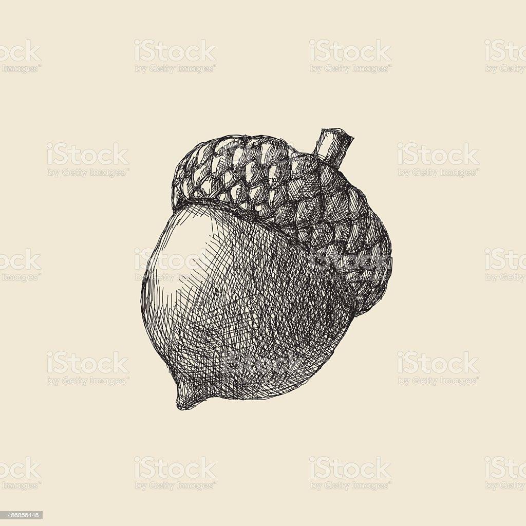 Acorn Drawing vector art illustration