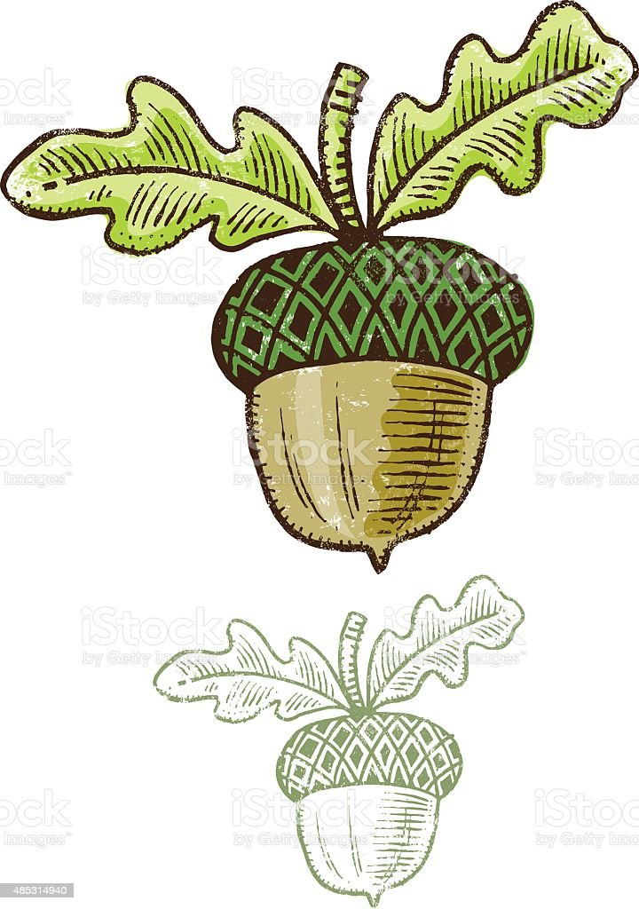 Acorn illustration with a felt pen vector art illustration