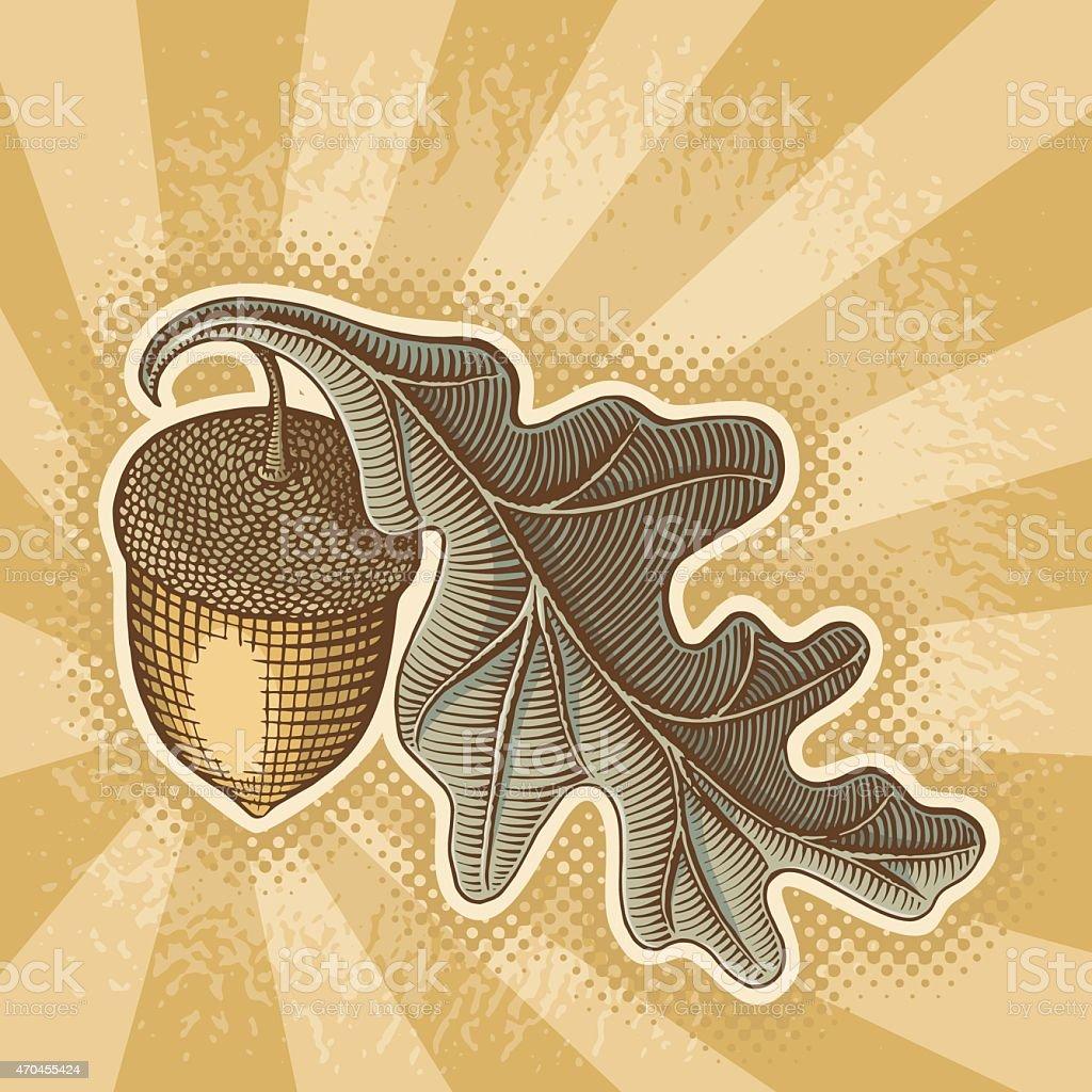 Acorn on sunbeam vector art illustration