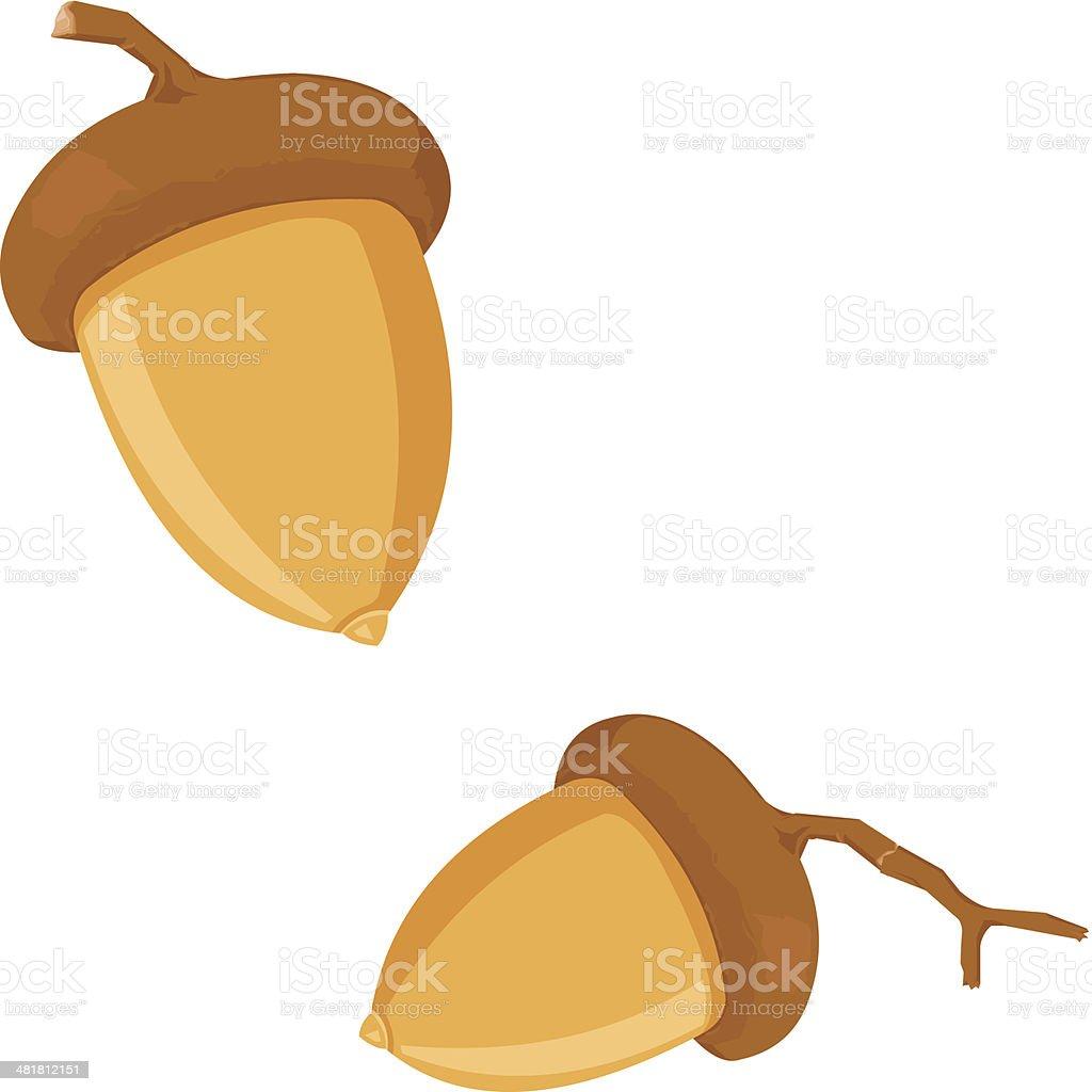 Acorn vector art illustration