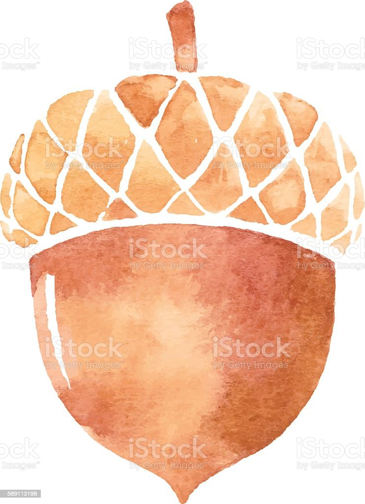 Acorn Watercolor vector art illustration