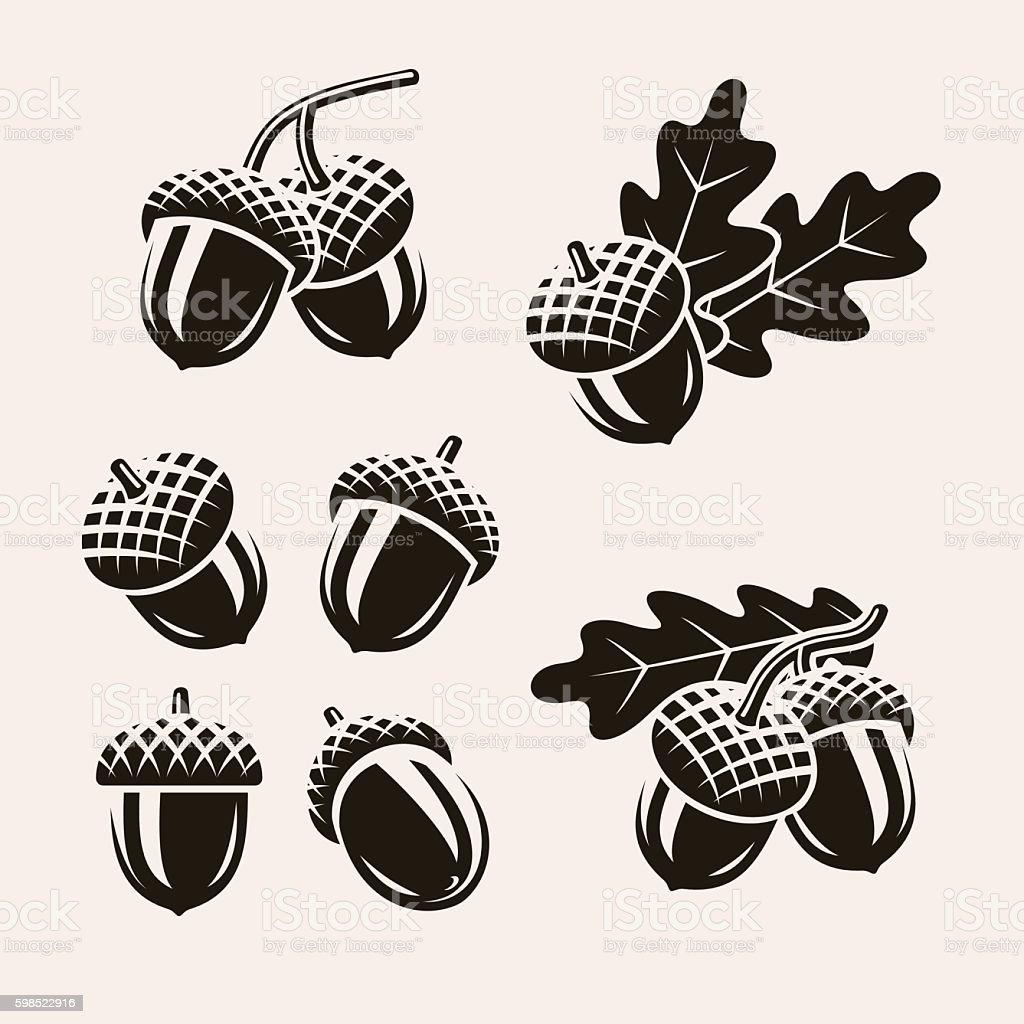 Acorns set. Vector vector art illustration