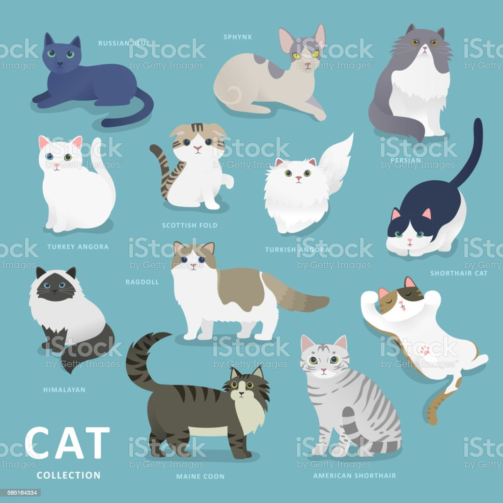 Adorable cat breeds collection vector art illustration